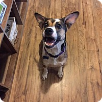 Adopt A Pet :: Bella - Roanoke, VA