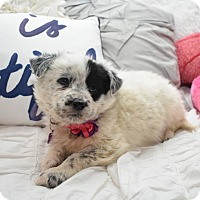 Adopt A Pet :: Gladys - Eden Prairie, MN