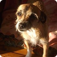 Adopt A Pet :: Daisy - Crawfordville, FL