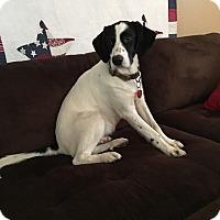 Adopt A Pet :: Duke - Davenport, IA