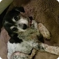 Adopt A Pet :: Camden - Glendale, AZ