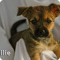 Adopt A Pet :: Allie - Mission Viejo, CA