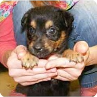 Adopt A Pet :: Mouse - Alexandria, VA