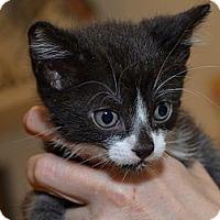 Adopt A Pet :: Ali - Brooklyn, NY