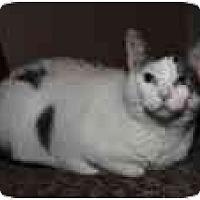 Adopt A Pet :: Bette Davis - Cleveland, OH