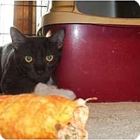 Adopt A Pet :: Leon - Acme, PA