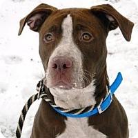Adopt A Pet :: Stossie - Cheyenne, WY
