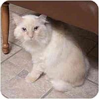 Adopt A Pet :: Delilah - Phoenix, AZ
