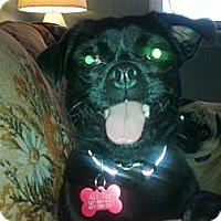 Adopt A Pet :: Rosie - Cumberland, MD