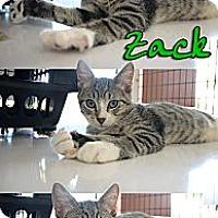 Adopt A Pet :: Zack - Bradenton, FL