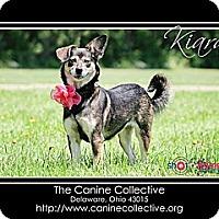 Adopt A Pet :: Kiara - Delaware, OH