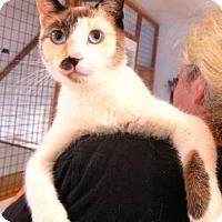 Adopt A Pet :: Dominique - Davis, CA