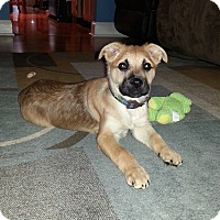Adopt A Pet :: Orianna - Randolph, NJ