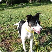 Adopt A Pet :: Bruno - Pittsburg, KS