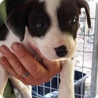 Adopt A Pet :: Anaheim - Gainesville, FL