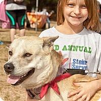 Adopt A Pet :: Fiona - Johnson City, TX