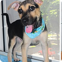 Adopt A Pet :: Brian - Surrey, BC