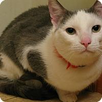 Adopt A Pet :: Possum - Bedford, VA