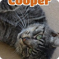 Adopt A Pet :: #90 Cooper - fostered GB - Lawrenceburg, KY