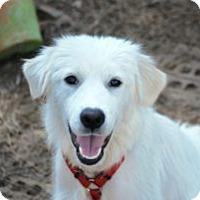 Adopt A Pet :: Powderpuff - Minneola, FL