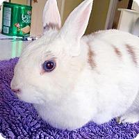 Adopt A Pet :: Poitin - Miami, FL