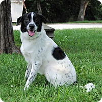 Adopt A Pet :: Louie - Parsons, KS