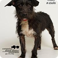 Adopt A Pet :: Chuey - Baton Rouge, LA