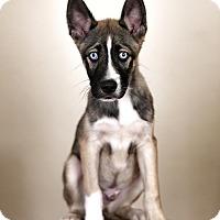 Adopt A Pet :: Dorito - Los Angeles, CA