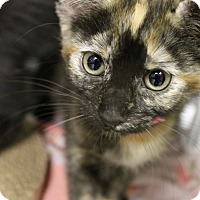 Adopt A Pet :: Charity - Medina, OH