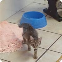 Adopt A Pet :: Quella - Chippewa Falls, WI