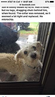 Boxer/Yorkie, Yorkshire Terrier Mix Dog for adoption in Whiteville, North Carolina - Rescue volunteers needed now!
