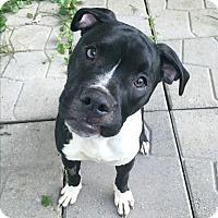Adopt A Pet :: Wesley - Grand Rapids, MI
