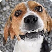 Adopt A Pet :: Topper - Huntsville, AL