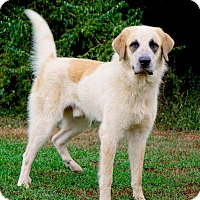 Adopt A Pet :: Rocky - Westport, CT