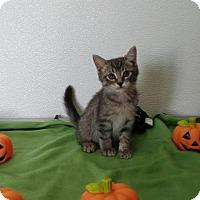 Adopt A Pet :: Aspen - China, MI
