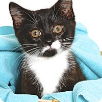 Adopt A Pet :: AARON - Gloucester, VA