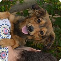 Adopt A Pet :: Leo - Lodi, CA