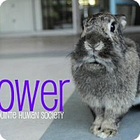 Adopt A Pet :: Flower - Hamilton, ON