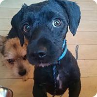 Adopt A Pet :: Jonny - San Pedro, CA
