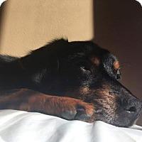 Adopt A Pet :: Jasper - Woonsocket, RI