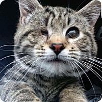 Adopt A Pet :: Chester - Mount Laurel, NJ