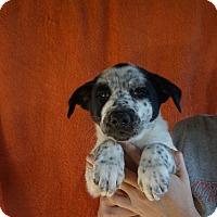 Adopt A Pet :: Zipper - Oviedo, FL