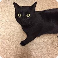 Adopt A Pet :: Butler - Warrenton, MO
