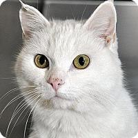 Adopt A Pet :: Betty - Fort Leavenworth, KS