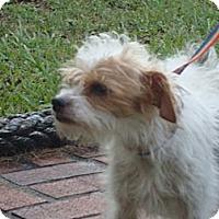 Adopt A Pet :: Magsy - Duluth, GA