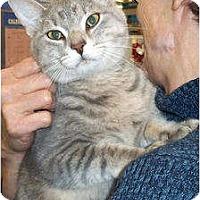 Adopt A Pet :: Billy - St. Louis, MO