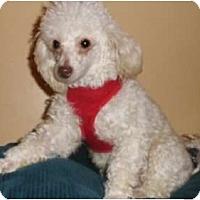 Adopt A Pet :: Bernie - Mooy, AL