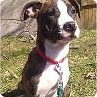 Adopt A Pet :: Napoleon - Silver Lake, WI