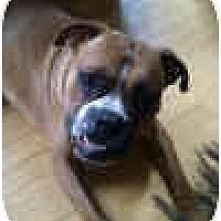 Adopt A Pet :: Morris Bertram - Sunderland, MA