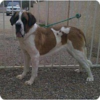 Adopt A Pet :: ALICE - Glendale, AZ